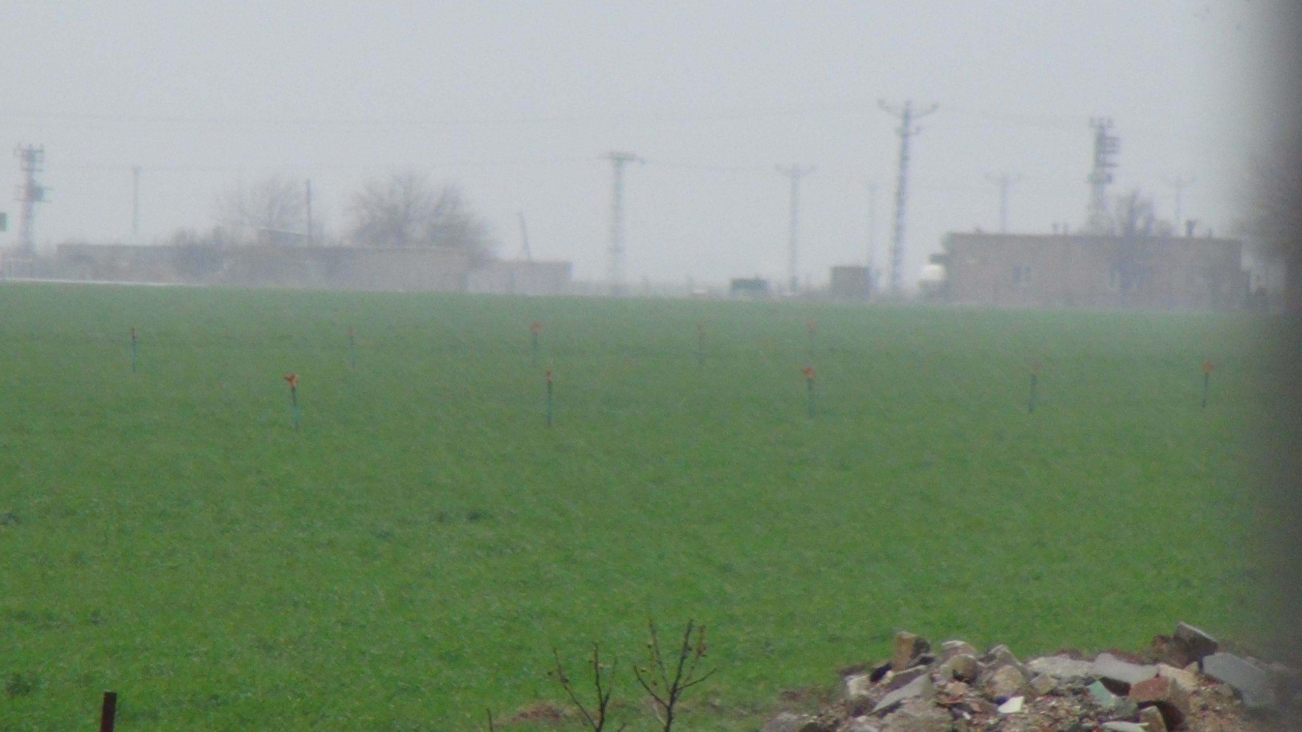Yağan yağışlarla Kızıltepeli çiftçinin yüzü güldü